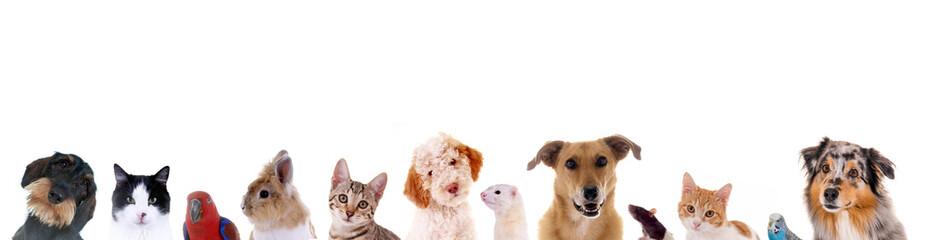 Unterschiedliche Haustiere – Köpfe in einer Reihe