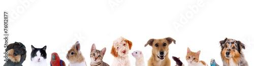 Staande foto Hond Unterschiedliche Haustiere – Köpfe in einer Reihe