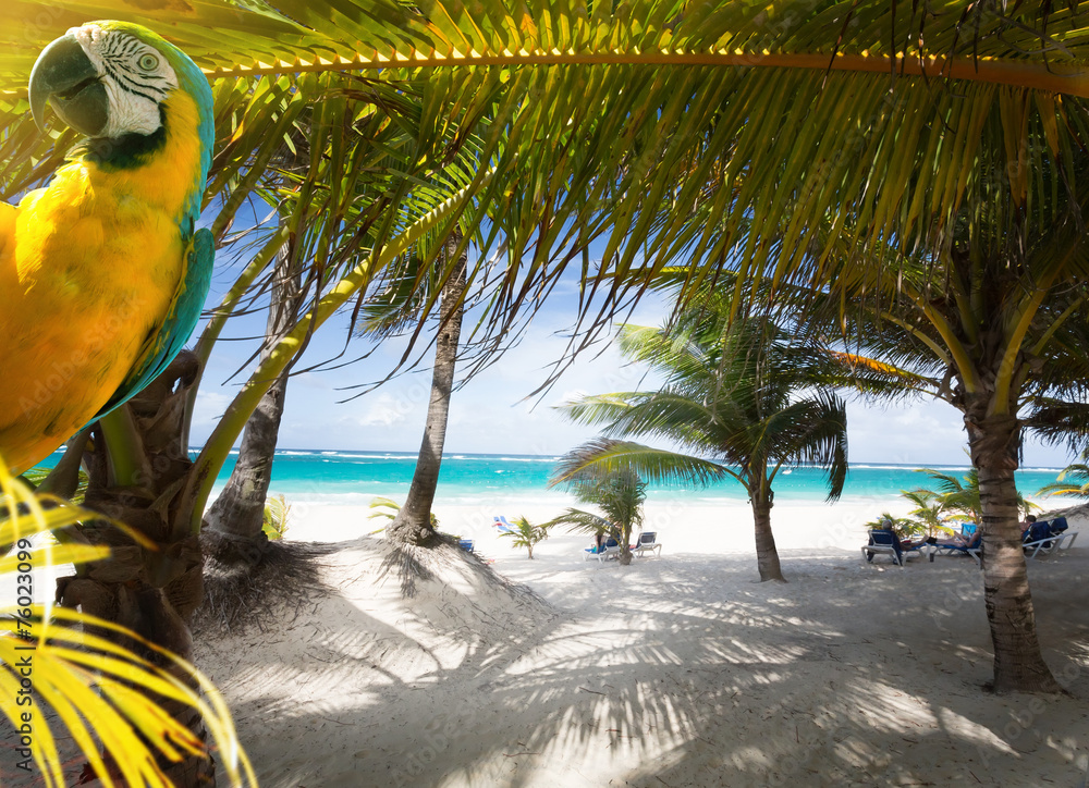 Fototapeta Art Vacation on Caribbean Beach Paradise