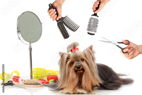 Yorkshire Terrier Grooming At The Salon For Dogs Buy This Stock