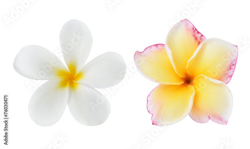 Tuinposter Frangipani Tropical flowers frangipani (plumeria) isolated on white backgro