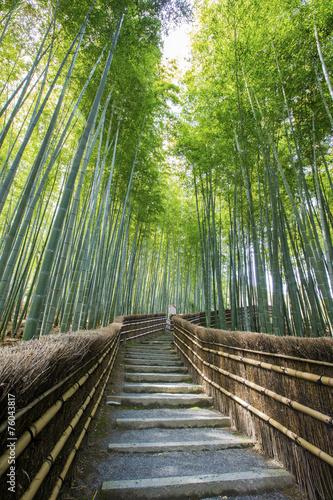 Foto op Canvas Bamboo Bamboo forest walkway near adashinonenbutsuji temple, Kyoto