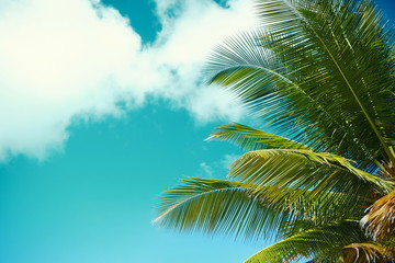 palm leaf tree branch on blue sky background