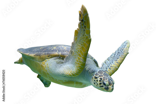 Deurstickers Schildpad Sea turtle