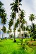 Exotic Paradise Under Palms