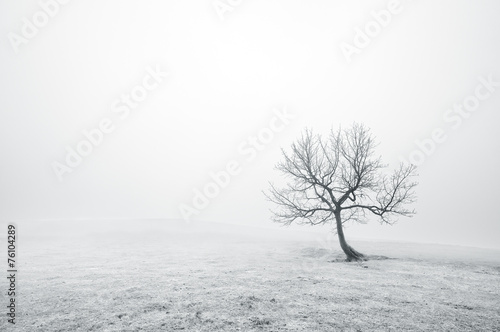 bare lonely tree in black and white