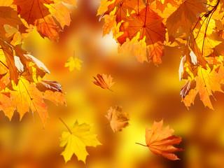 Fototapeta Drzewa fallen leaves in autumn forest at sunny weather