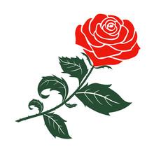 Red Rose Design,vector  Illust...