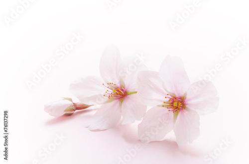 Stickers pour portes Fleur de cerisier 桜のイメージ
