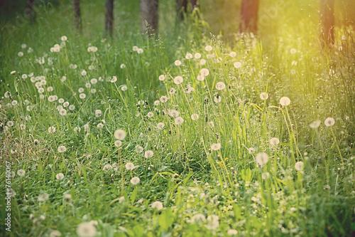 In de dag Bomen yellow flowers blooming in spring farm field