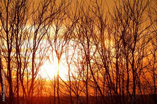Tree branches on dramatic sunset sky - abstract photo