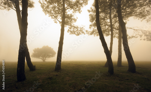 trees in the morning