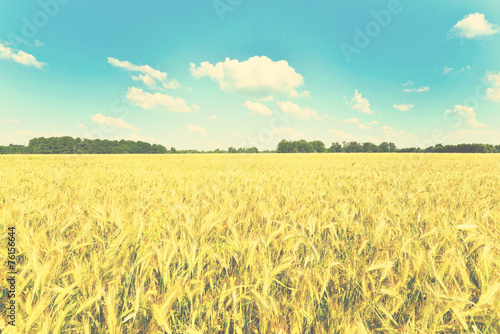 Fotobehang Zwavel geel Summer landscape
