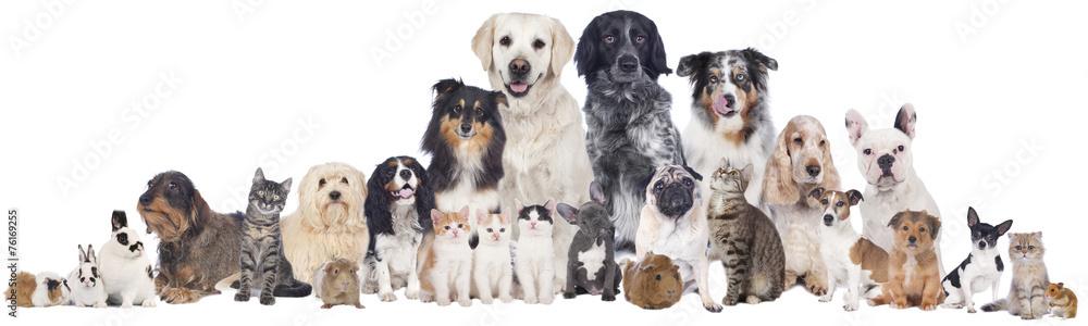 Fototapety, obrazy: Haustiergruppe