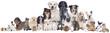 Haustiergruppe