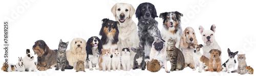 Haustiergruppe Fototapete
