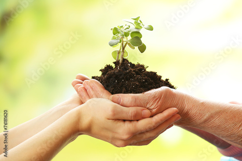 Garden Poster Plant Hands of elderly and young women holding plant,