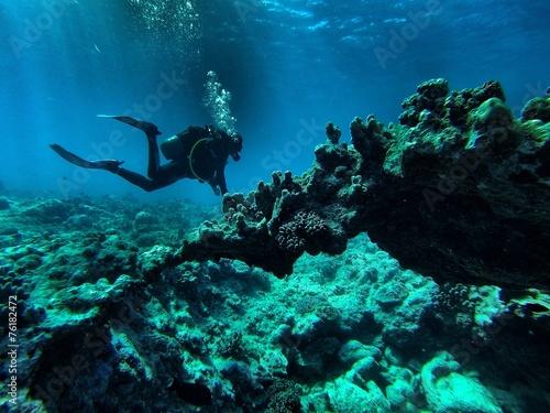 mata magnetyczna Koral