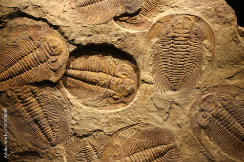 Photo sur Toile Les Textures fossil trilobite imprint in the sediment.