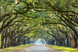 Fototapeta Room - Country Road Lined with Oaks in Savannah, Georgia