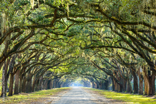 Fotografering  Country Road Lined with Oaks in Savannah, Georgia