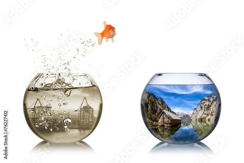 Fotografía  fish rethink concept
