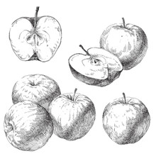 Vector Set Of Hand Drawn Apples