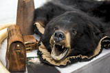 Fototapeta Zwierzęta - Nielegalny przemyt