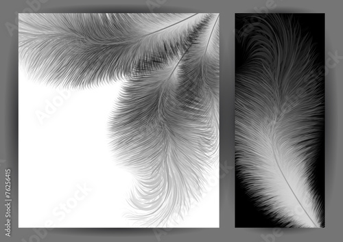 Fotografie, Obraz  Abstract feather background