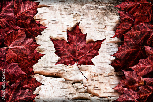 Spoed Foto op Canvas Canada Canadian Flag made out of real Maple Leaves on a birch bark