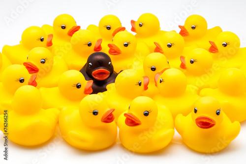 Fotografía  Grupo de patos de goma