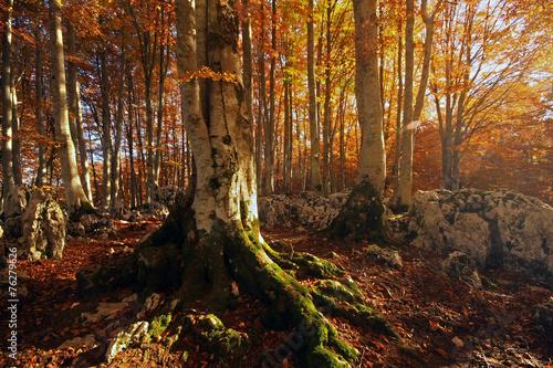 Tramonto nel bosco di aceri © Claudio Quacquarelli