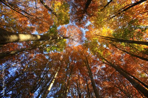 Aceri, mille colori © Claudio Quacquarelli