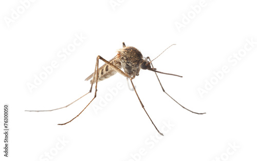 Photo Macro of mosquito isolated on white