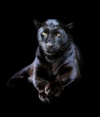 Panel Szklany Pantera Black leopard
