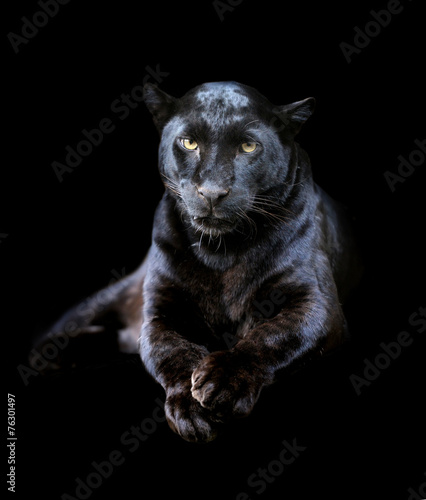 Foto op Canvas Panter Black leopard