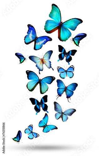 zbior-niebieskich-motyli-na-bialym-tle