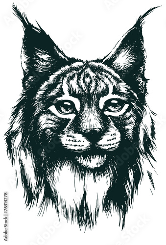 Photo sur Toile Croquis dessinés à la main des animaux Lynx vector illustration