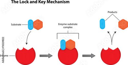 The Lock and Key Mechanism Wallpaper Mural