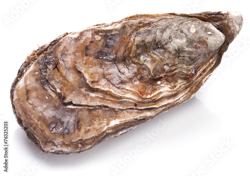 Photo  Raw oyster on a whte background.