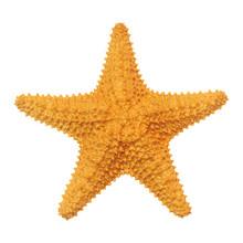 Caribbean Starfish Isolated On...