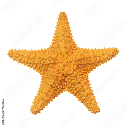 Caribbean starfish isolated on white background.