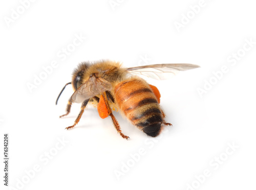 In de dag Bee bee isolated on the white