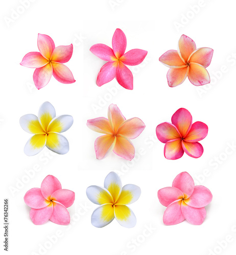 Photographie Frangipani flower isolated on white