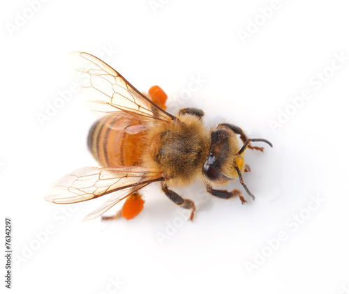 Recess Fitting Bee bee isolated on the white