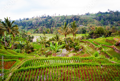 Foto op Plexiglas Indonesië Rice terraces on Bali, Indonesia