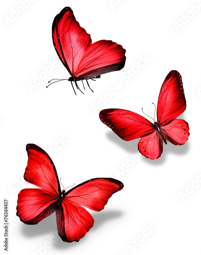 Fototapeta  Three red butterfly, isolated on white background