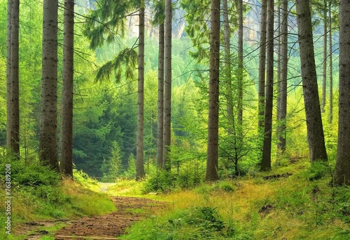 Fotografie, Obraz  Wald - forest 40