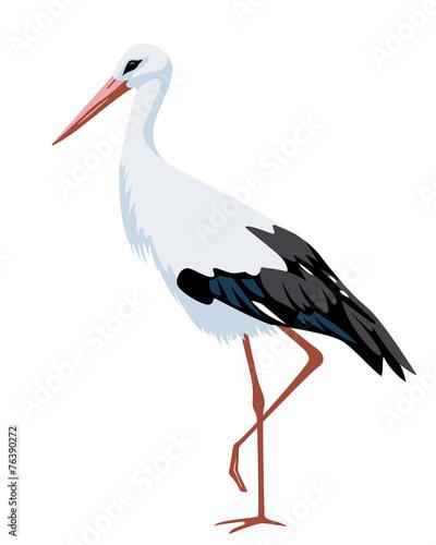 illustration of stork Fototapeta