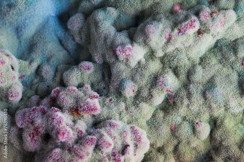 Fotografie, Obraz  macro of mold relief